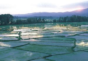Kočanska rižina polja