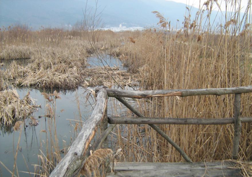 Monospitovsko blato
