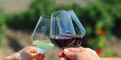 Vinska priča Tikvešije